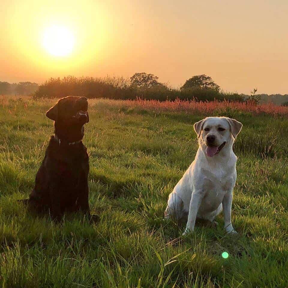 Hond hondencamping vakantie met hond