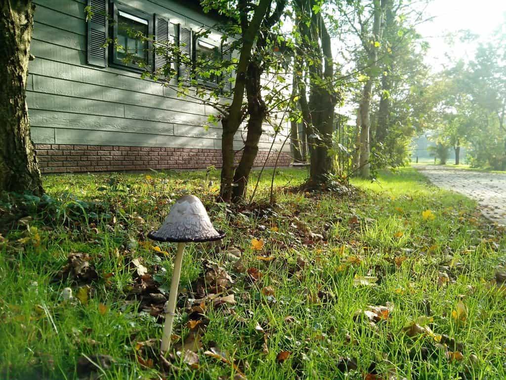 Herfst op Resort de Arendshorst